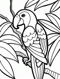 parrot bird coloring pages peacock bird coloring pages