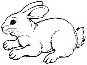 rabbit coloring pages | HD Wallpapers