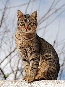 cat Wikipedia the free encyclopedia