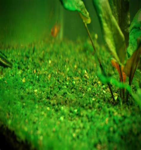 10 Easy Ways to Control Algae Growth in Your Aquarium