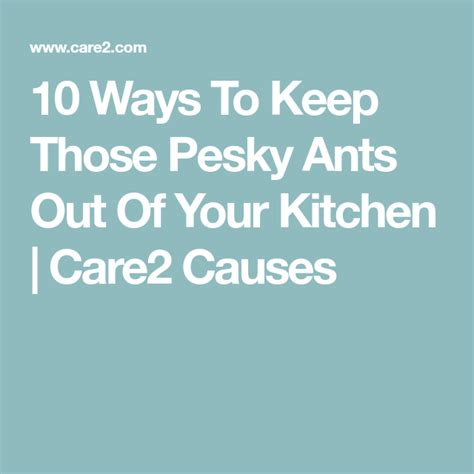10 Ways To Keep Those Pesky Ants Out Of Your Kitchen