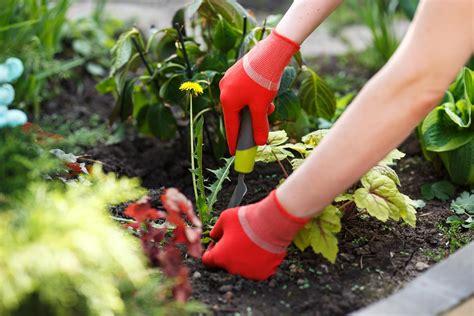 11 Ways to Kill Garden Weeds Reader s Digest