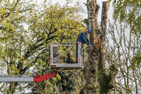 20 Best Tree Services Fayetteville NC Tree Removal