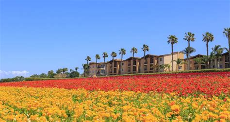 22 Best Things to Do in Carlsbad CA VacationIdea