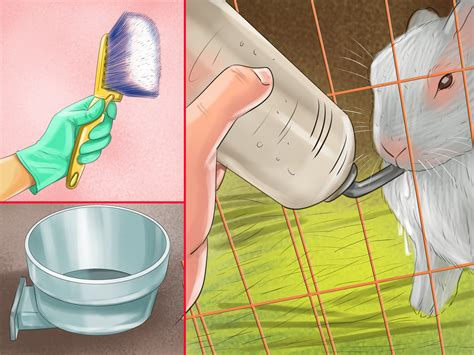 3 Ways to Choose a Rabbit Cage wikiHow