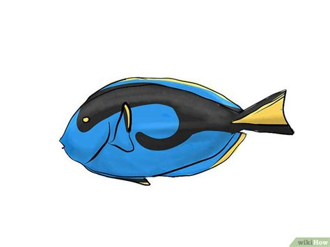 3 Ways to Draw a Blue Tang wikiHow
