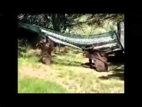 3 little bears and momma play on hammock YouTube