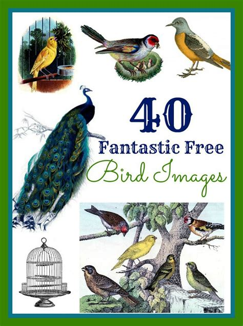 40 Best Bird Images The Graphics Fairy