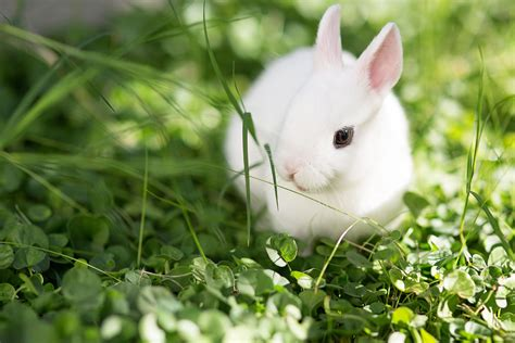 46 Rabbit Breeds to Keep as Pets Pet Rabbits The Spruce
