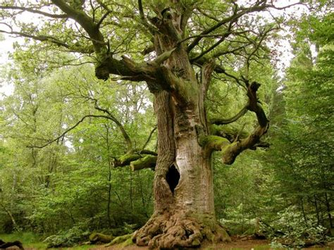 65 Pictures Of Trees To Make You Love Nature More SloDive