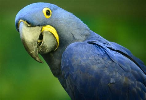 7 Things You Never Knew about the Exotic Bird Trade and