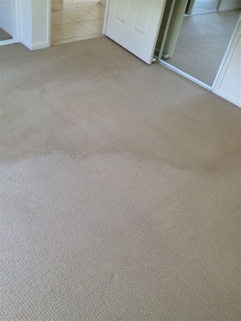 All Carpet Care Gold Coast Carpet Cleaning Pest