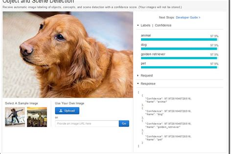 Amazon s image recognition AI can identify your dog down