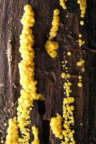 Andy s northern Ontario Alien Wildflowers Mushroom or Fungi