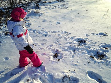 Animal Tracking with Children A Beginner s Guide Rain