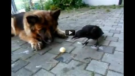 Animal Videos Video Clips Funny Animals Amazing Vids