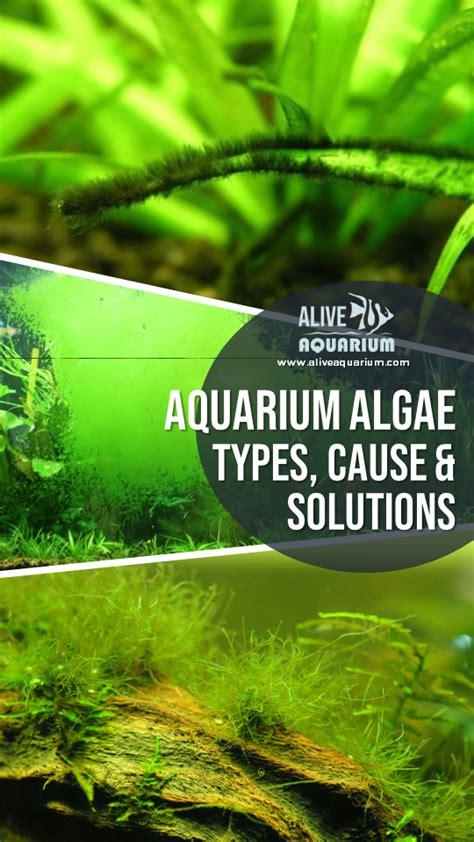 Aquarium Algae Control Top 10 Algae Busting Tips