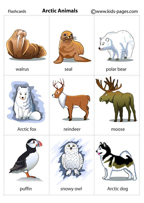 Arctic Animals flashcard kids pages