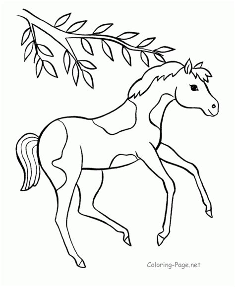 Baby Horse Coloring Page Pony coloring TheColor