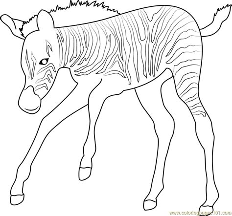 Baby Zebra Up Coloring Page Free Zebra Coloring Pages
