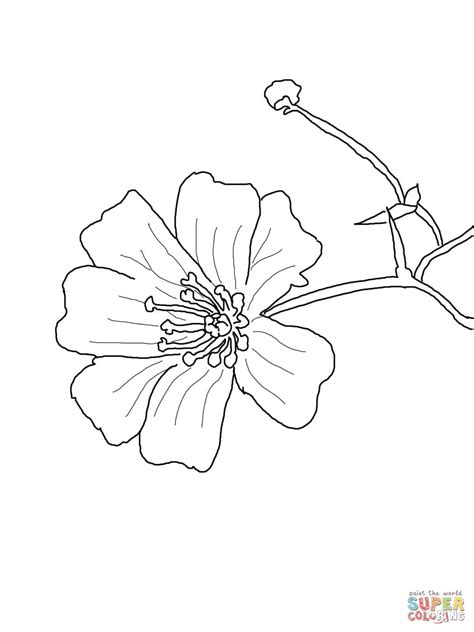 Baby s Breath Flower coloring page Free Printable