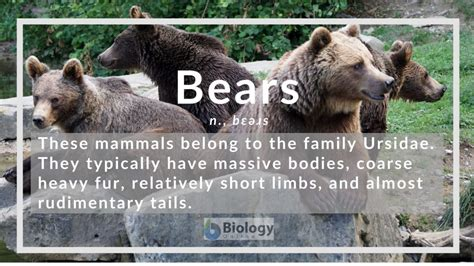 Bear definition of bear by The Free Dictionary