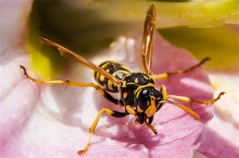 Bee Facts and Wasp Facts List of Interesting Facts