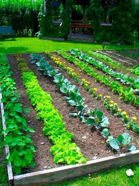 Best 10 Vegetable garden layouts ideas on Pinterest