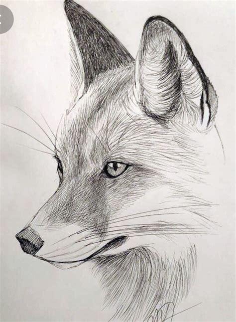 Best 20 Draw animals ideas on Pinterest How to draw