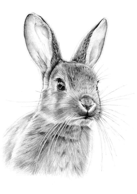 Best 20 Rabbit drawing ideas on Pinterest Rabbit