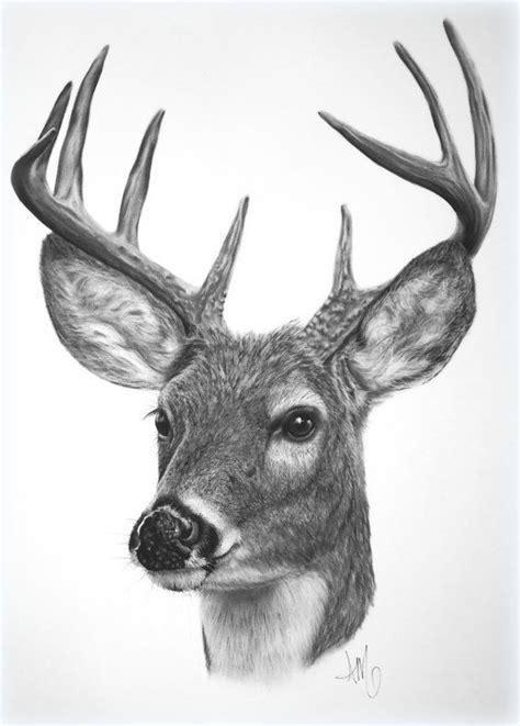Best 25 Deer drawing ideas on Pinterest Deer tattoo
