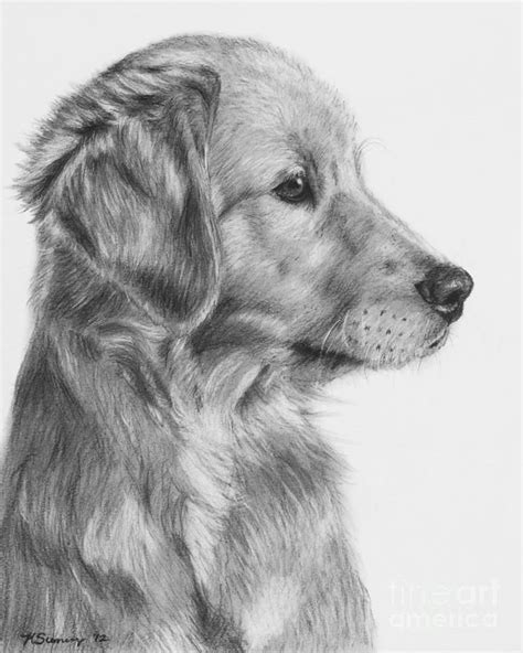 Best 25 Dog drawings ideas on Pinterest How to draw
