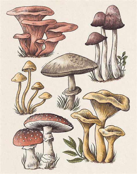 Best 25 Mushroom drawing ideas on Pinterest Mushroom