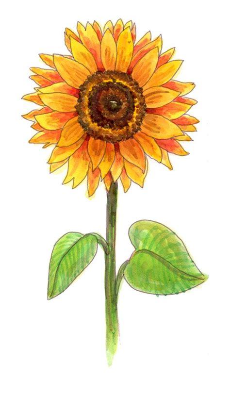 Best 25 Sunflower drawing ideas on Pinterest Sunflower