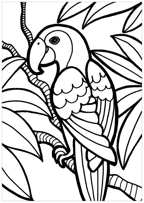 Bird Coloring Pages Color pictures of birds