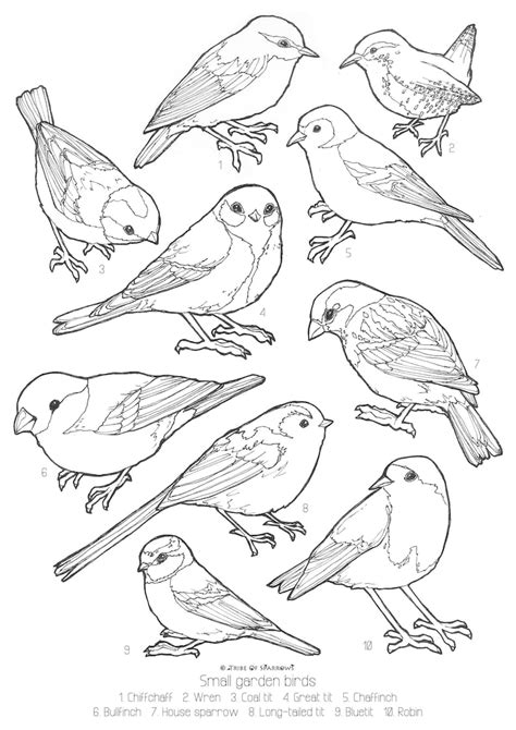 Bird Online Coloring Pages Page 1