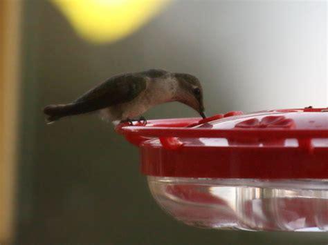 Birding News birdingnews via aba