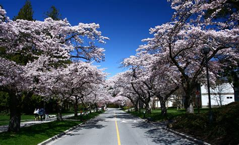 Blossom is on the way but what are the best trees