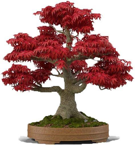 Bonsai tree Etsy