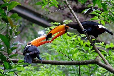 Breeding Care Notes Toucan Jungle