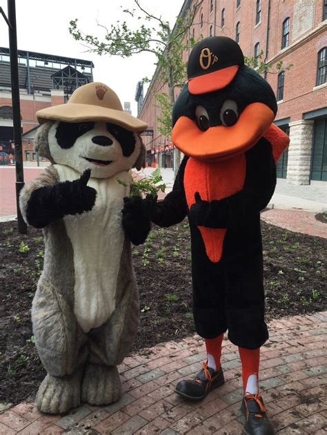 Bringing Baltimore Orioles Back to the Ballpark The