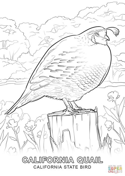 California State Bird coloring page Free Printable