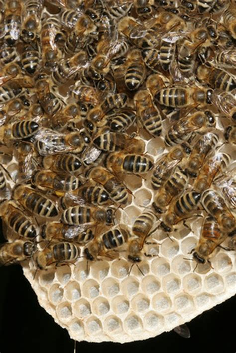 Can Beeswax Benefit the Skin LIVESTRONG COM