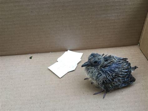 Captain s Log Found a Baby Bird What Do I Do