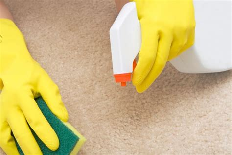 Carpet and Upholstery Cleaning White Plains NY Flat