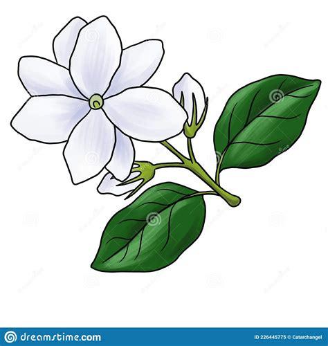Cartoon Jasmine Flower Drawing How to Draw Cartoons