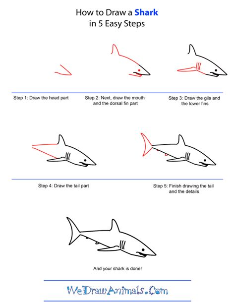 Cartoon Shark Step by Step Drawing Lesson How to Draw