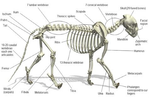 Cat Skeleton PoC
