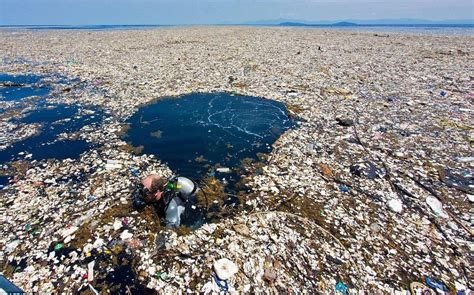 Clean Our Oceans The Impact of the Great Pacific Garbage