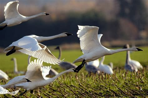 Climate Change Will Disrupt Half of North America s Bird